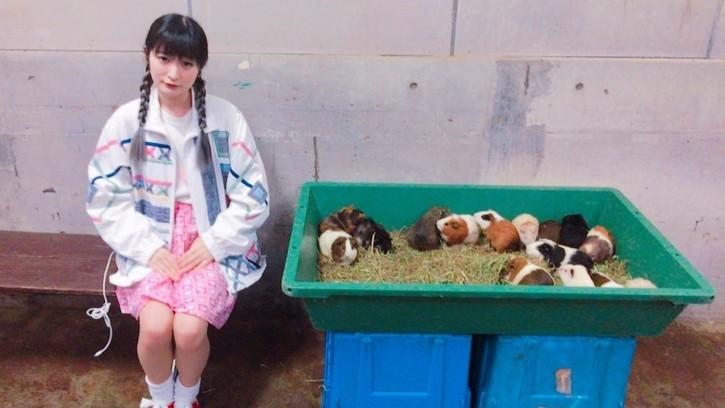 Ling Ling Guinea Pig