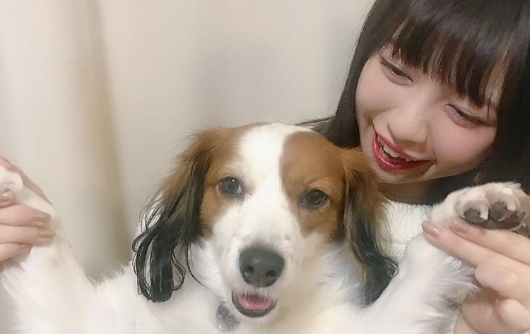 wasuta dog